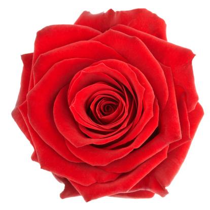 Significado del color de las rosas colorexpression - Significado colores de las rosas ...